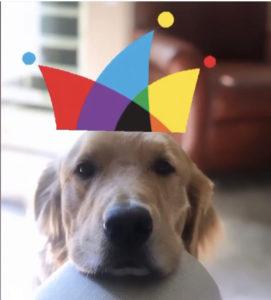 dog_days_winner